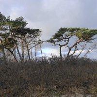 Побережье Балтийского моря в погожий декабрьский день :: Маргарита Батырева