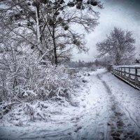 после снегопада.. :: юрий иванов