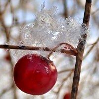 Снежинки декабря :: Геннадий Ячменев