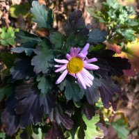 Ноябрьский цветок. :: Павел Бескороваев