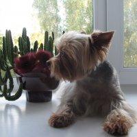 У окна :: Лидия Суюрова