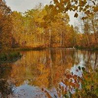 Золотые отражения Серебряного озера... :: Sergey Gordoff