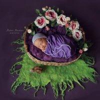 Сон с ароматом роз... :: Марина Макарова