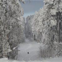 Зима в Бурятии :: Владимир Тюменцев
