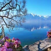 Весна на Женевском озере :: Elena Wymann