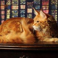 Бурундука - главная кошка прайда) :: Татьяна Шеркунова