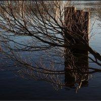 осенняя ветка над рекой :: sv.kaschuk