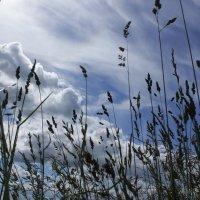 Лето, небо и ... :: Екатерина Кучко