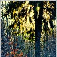 лес :: Олег Осипов