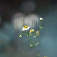 Словно маленькие луны... :: Foggy Morning