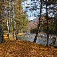 По ковру из жёлтых листьев. :: Валерий Медведев