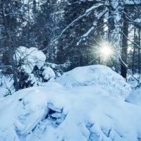 Мороз и Солнце...День чудесный ❄ :: Олеся Авезова