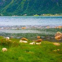 Путешествуя по Норвегии :: Vsevolod Boicenka