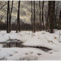Тёплый декабрь. :: Олег Бабурин