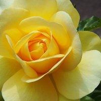 Цветок волшебный :: Swetlana V