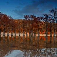 Кипарисовое озеро :: Александр Грибакин