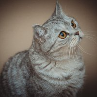 Кошка :: Алена Торопов