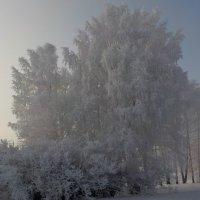 Декабрьское кружево :: Ольга