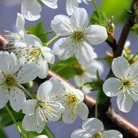 Весенние метели белые прошли..... :: Валентина ツ ღ✿ღ