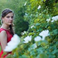 Шиповник в цвету :: Zhanna