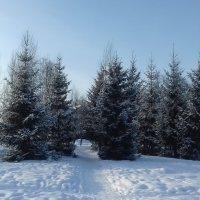 Зима в парке. :: Мила Бовкун