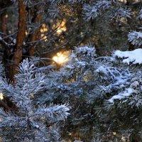 Леса, так же, как озера, моря и реки, — лучшее украшение земли, ее великолепный праздничный наряд... :: Вадим Якушев