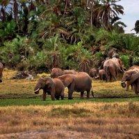 Слоняшки! :: Натали Пам