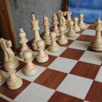 шахматы :: венера чуйкова