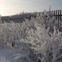 Цветник Деда Мороза :: Ольга
