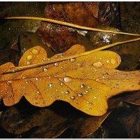 Осенний натюрморт :: Евгений Кочуров