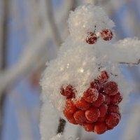 Шапочка из снежинок :: Светлана Винокурова
