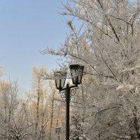 Беседка в зимнем парке. :: юрий Амосов