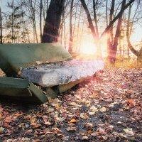 Лесной комфорт :: Mike214