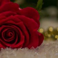 роза2 :: navalon M