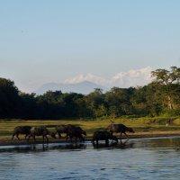Непал. Национальный парк Читван :: Gal` ka