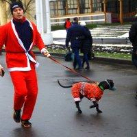 Готовимся к году  Собаки :: олег свирский