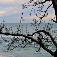 Деревья над водой преображаются... :: Людмила