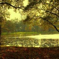 У озера.. :: Антонина Гугаева