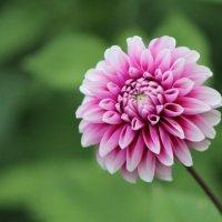 Цветок :: Александр Титков
