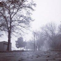 туман :: Александр Довгий