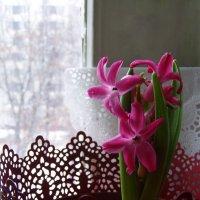 новогодний цветочек :: Анна Воробьева