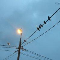 Люди проходят - голуби не против :: Александрр Petrov