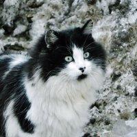 Черно-бело-серое. :: Святец Вячеслав
