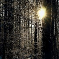 И мир, снегами обновлён, озвучен и расцвечен... :: Константин Подольский