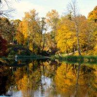 И опять осень... :: Валентина Данилова