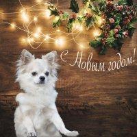 Друзья! С наступающим годом Желтой Собаки!!! :: Ирина Малышева