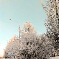 Морозное одеяние :: Сергей Царёв