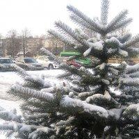 Зимняя, снежная ель :: Елена Семигина