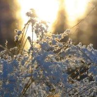Доброе утро! :: Андрей Генинг.