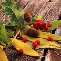 Природные оттенки сентября :: Татьянка *